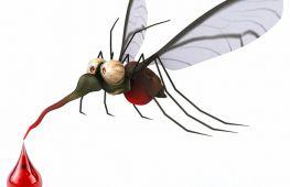 Какие запахи привлекают, а какие – отпугивают комаров. Есть ли для них разница в группе крови человека