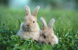 Какую траву едят кролики: что полезно, а что вредно для них