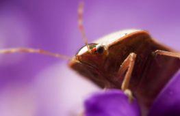 Как быстро и эффективно вывести клопов: способы и средства для борьбы с паразитами, советы и рекомендации