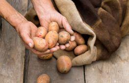 Выбор картофеля при покупке для хранения на зиму