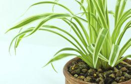 Как избавиться от мошки в комнатных растениях: берем на заметку доступные народные средства