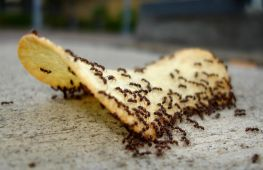 Как можно избавиться от домашних муравьев в квартире