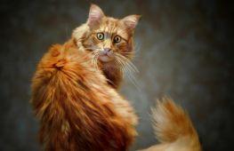 Сюрпризы от кота: как отучить питомца гадить в доме
