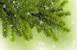 Продажа живых елок на Новый год как бизнес