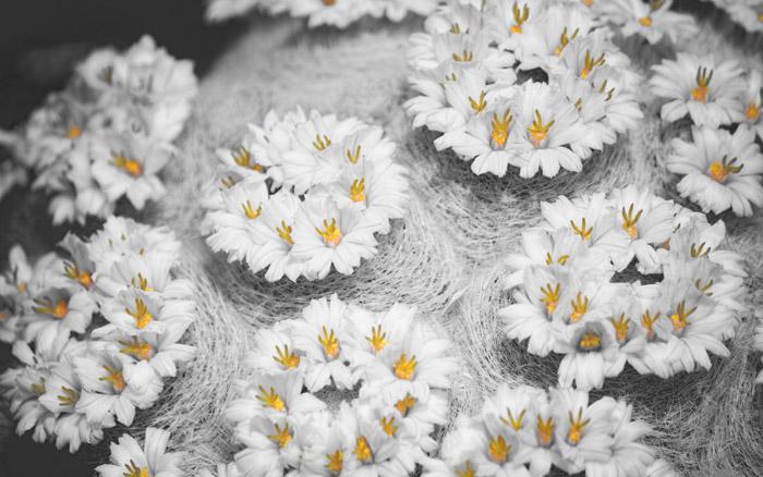 Цветы можно сделать своими руками