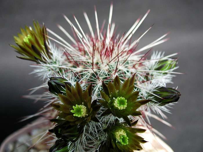 Фен шуй предлагает с осторожностью относиться к кактусам в доме