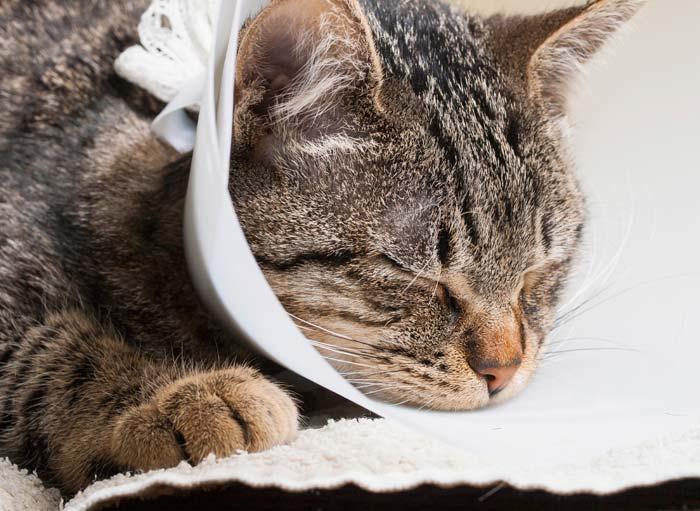 Лучше проводить операцию дома, так питомцу легче будет перенести стресс