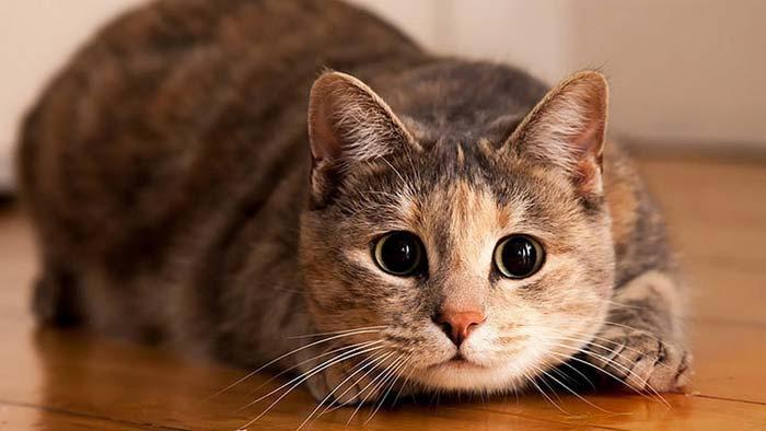 Ветеринары утверждают, что кастрированные коты живут дольше