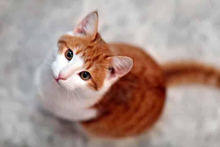 Молодые коты чаще всего хорошо переносят операцию