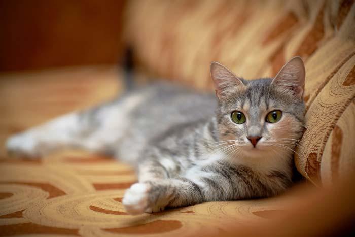 Кастрация кота: плюсы и минусы операции и совет ветеринара кастрировать или нет - Zverki.Click