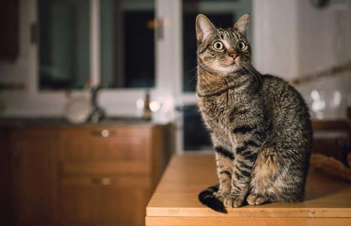 Возможно, кошке нужна своя территория, поэтому она занимает ваш стол