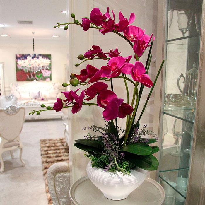 Орхидею лучше всего пересаживать после цветения