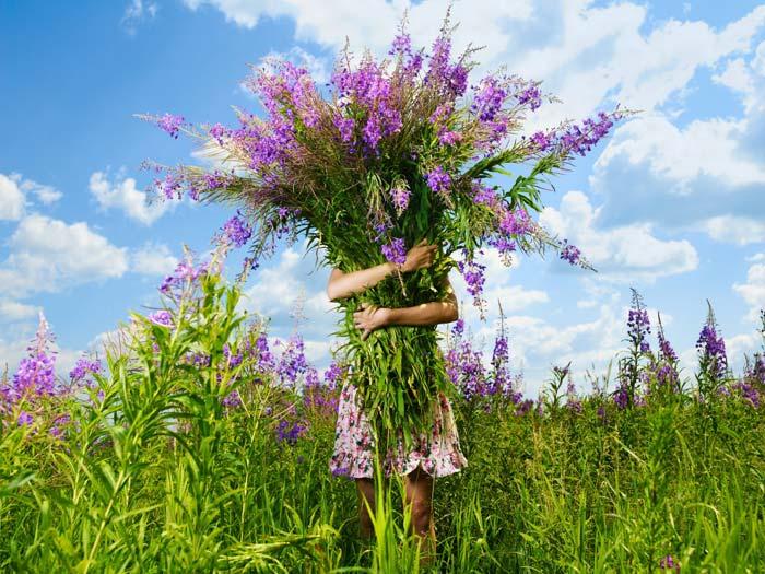 Собирать растение лучше во время его цветения