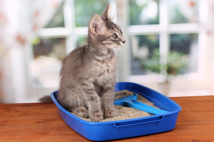 Прежде всего убедитесь, что кота устраивает чистота и размер лотка