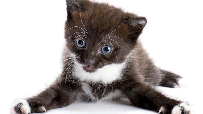 Будьте внимательны и настойчивы в воспитании полезных привычек кота