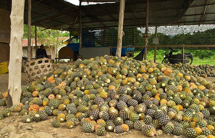 Самые крупные плантации ананасов расположены на Гавайях