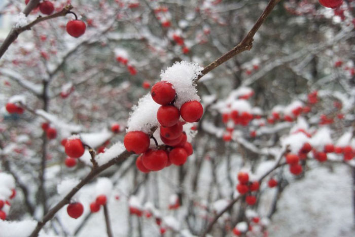 Синоптики обещают россиянам снежную зиму