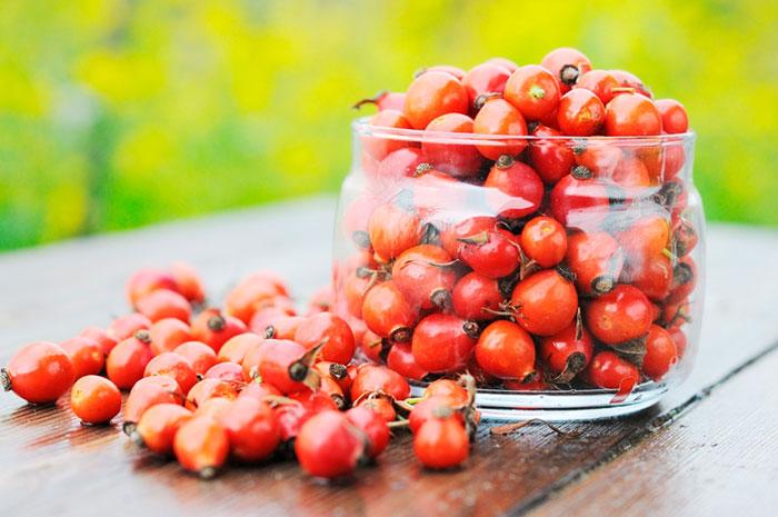 Для чая можно использовать цветы и плоды шиповника