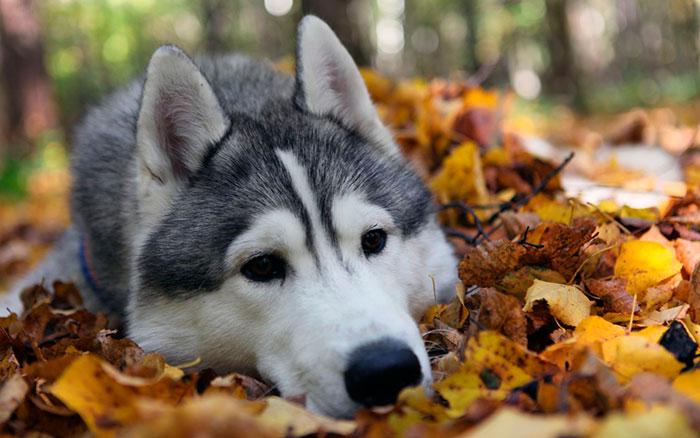 Течка у собак начинается в 15-2 года