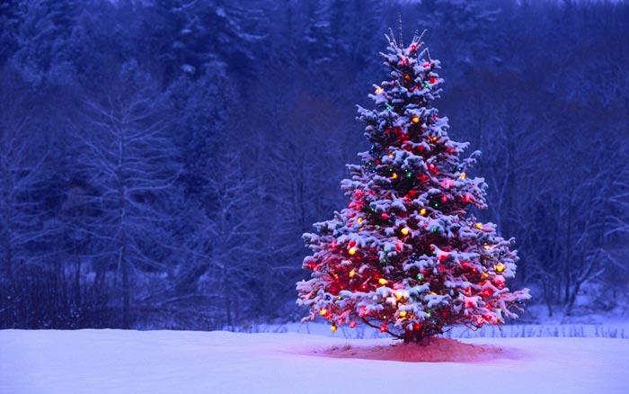 Традиция украшать елку возникла еще в старые времена