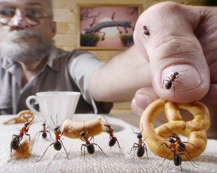 Чтобы не привлекать муравьев, убирайте пищевые продукты