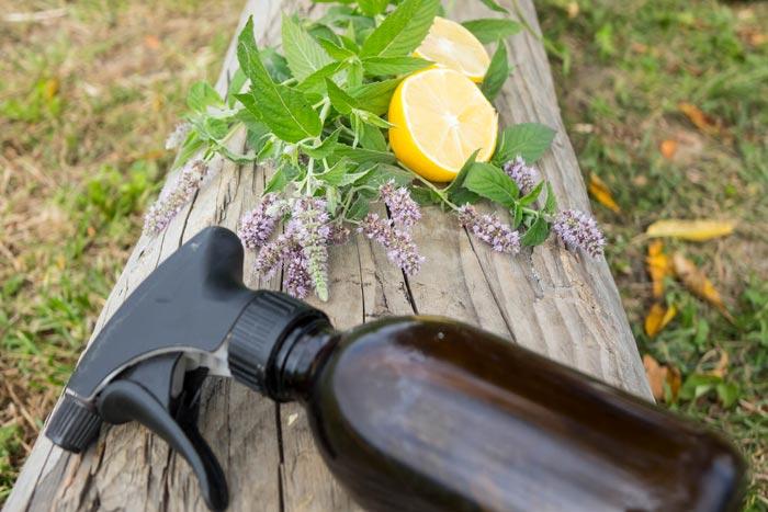Используйте эфирные масла и травы для отпугивания мух