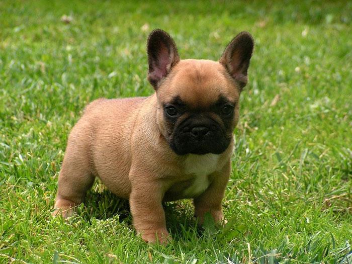 Понаблюдайте за поведением щенка: он должен быть активным и игривым