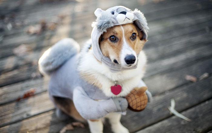 Костюм для собаки можно сделать на основе комбинезона