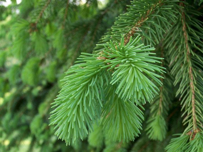 Закупая елки, позаботьтесь обо всех необходимых разрешающих документах
