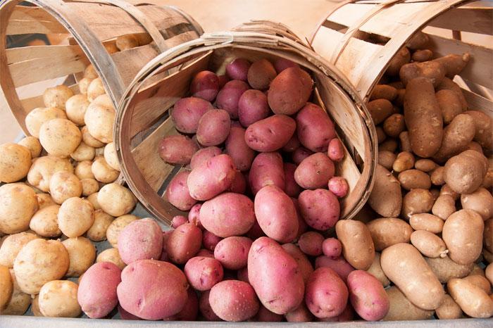 Лучше хранятся поздние сорта картофеля