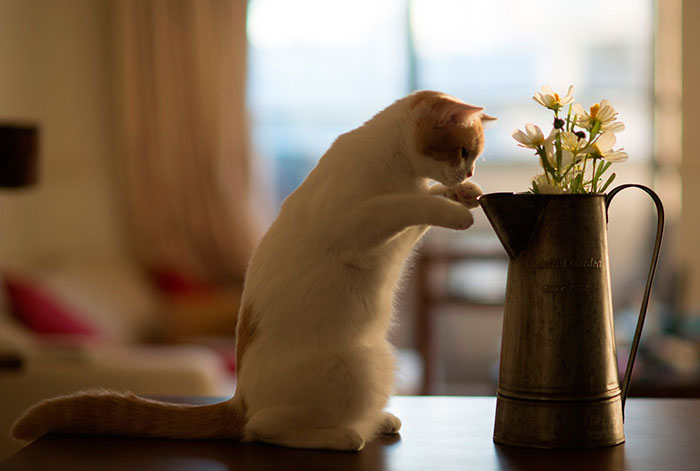Некоторые запахи в высокой концентрации могут навредить кошке, использовать их необходимо с осторожностью