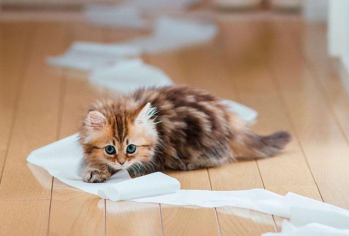 Кошки не переносят запах цитрусовых