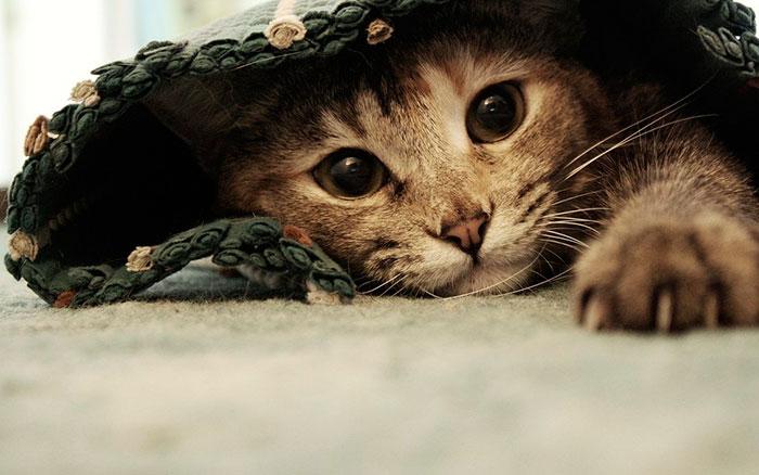 Если в месте, где любит играть кошка, положить веточку руты, туда она больше не подойдет