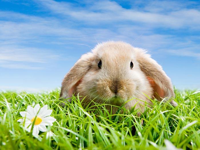 Для пользы кроликов лучше давать им траву разных сортов