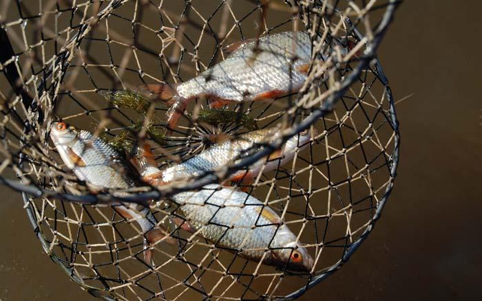Рыболовный садок своими руками