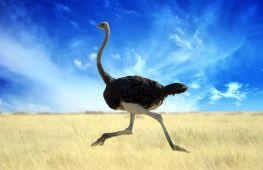 Самая большая птица в мире: летающая и не летающая