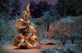 Почему именно елку наряжают на Новый год: история традиции