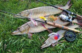 Ловля на спиннинг. Советы для рыбаков, как поймать щуку