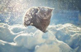 Зима 2016-2017 — какой погоды ждать в России