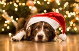 Смешные праздничные костюмы для собак на Новый год своими руками