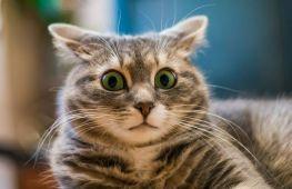 Отпугиваем кошку: какие запахи не понравятся вашему питомцу
