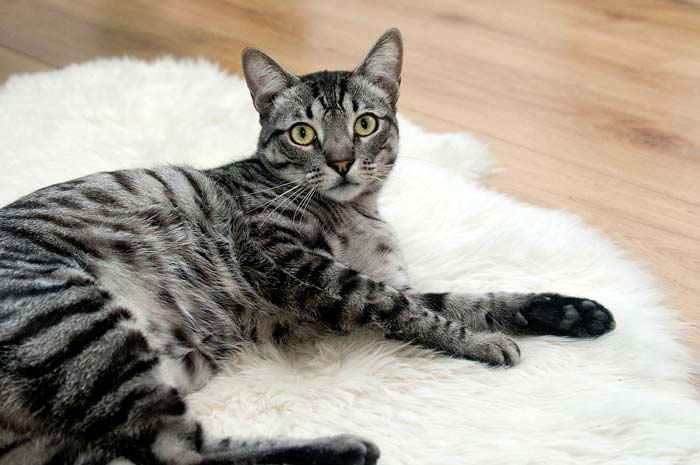 Стерилизация кошки с какого возраста можно делать
